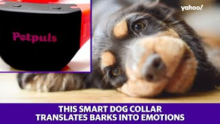 A dog collar that can tell pet owners how their dogs are feeling