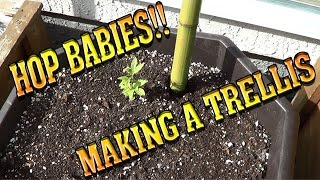 Hop Babies!!   Making A Basic Trellis