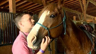 Swamp fever: Horses infected with incurable virus
