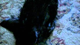 Pepper's 2nd bath Thumbnail