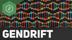 Gendrift ( Flaschenhalseffekt, Gründereffekt) – Evolutionsfaktoren 2