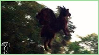What If The Jersey Devil Was Real?