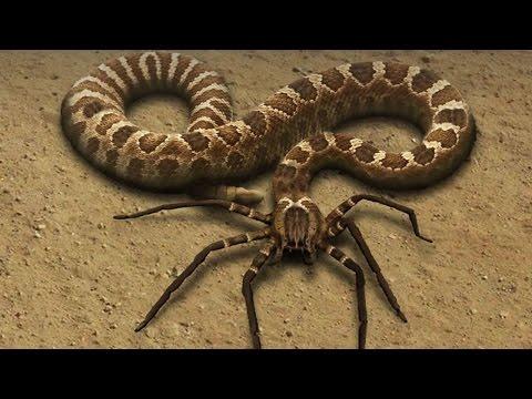 Dreiköpfige Schlange