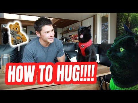 TEACH YOUR CAT HOW TO HUG #1