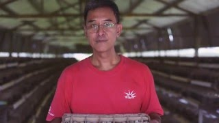 Beyond the Table: Uncle William of Singapore's Lian Wah Hang Quail Farm