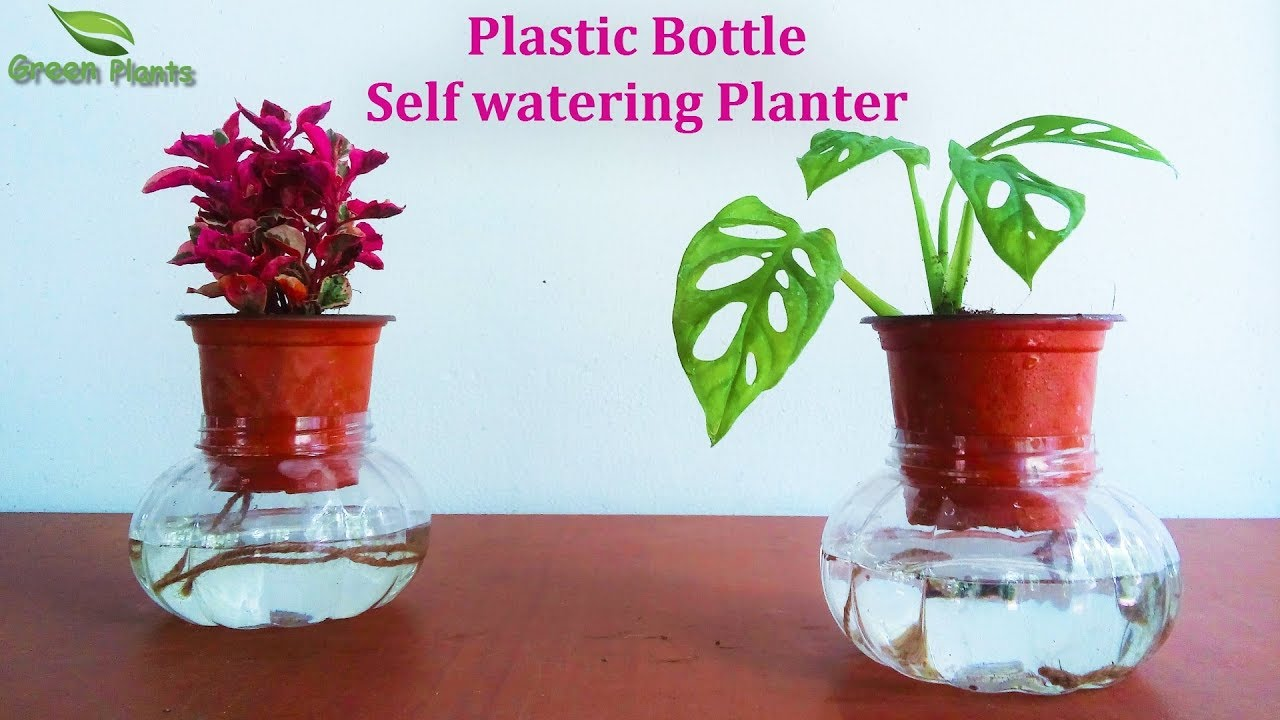 168 & Plastic Bottle Self watering System | Recycled Plastic Bottle Self watering Planter//GREEN PLANTS