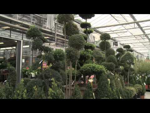 Tous Au Jardin : Votre Jardinerie Depuis Plus De 20 Ans Située à Havange.