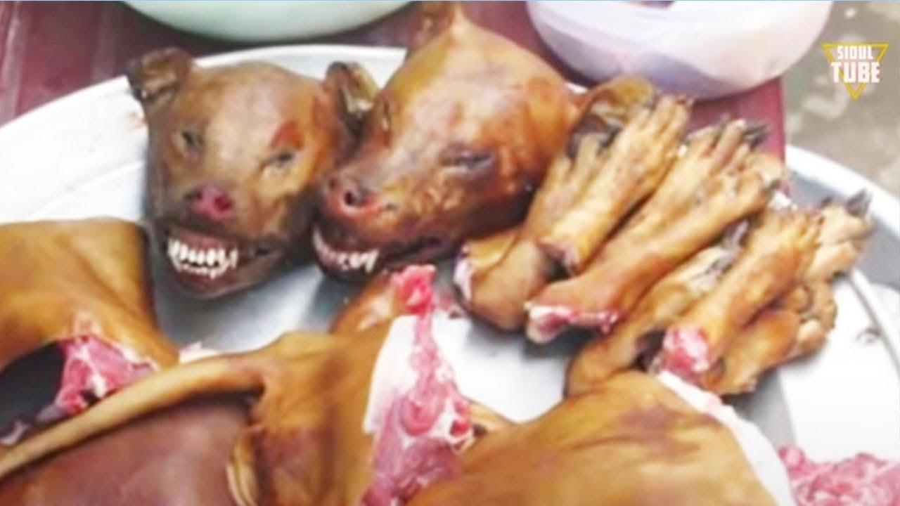 10 Makanan Ekstrim Paling Menjijikkan Youtube