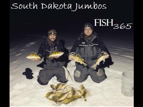 South Dakota Glacial Lakes Jumbo Perch Ice Fishing 2017