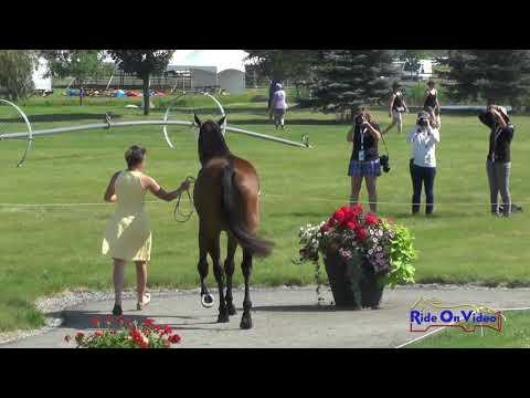 087J1 Erin Sylvester On Paddy The Caddy CCI3* FEI Jog 1 Rebecca Farm July 2017