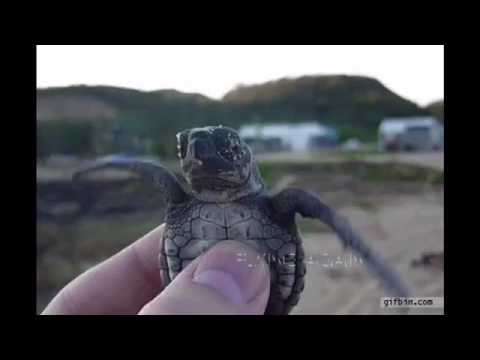 Turtle Gifs 1