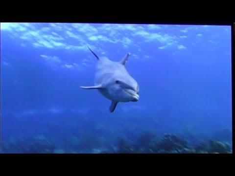 ((4K)) AURO 3D 11.1 (Dolphin: A 3D Adventure) + LG 84LM9600