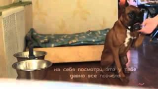 мысли собаки