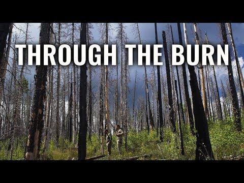 THROUGH THE BURN - A New Mexico Archery Elk Hunt