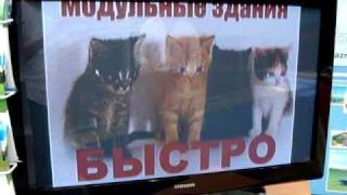 "Кошки и котята (""БЫСТРО! РАЗНЫЕ!"") на службе маркетинга."
