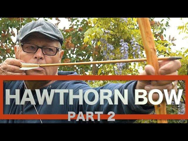 HAWTHORN BOW. The Hedgerow Selfbow. Primitive Technology in the Hedgerow. Part 2