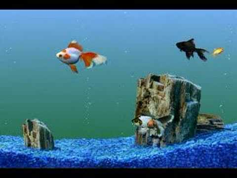 Goldfish Aquarium Tank Swimming Gold Fish Video Clip Youtube