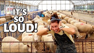 WE FINALLY DID IT! (Weaning lambs with ONE BIG SURPRISE):  Vlog 341