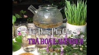 TÁC DỤNG PHỤ CỦA TRÀ HOA LAVENDER - Lavender Tea Side Effects