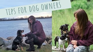 8 Tips for Extraordinary Dog Owners