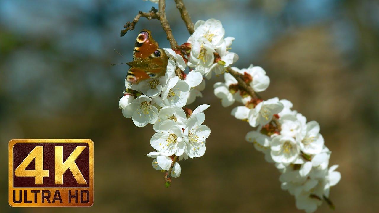 Uhd Spring Flowers Scene Flowers Leaves Episode 3 Trailer