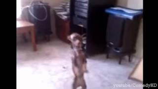 Танцующая собака ! Блин просто ржач !
