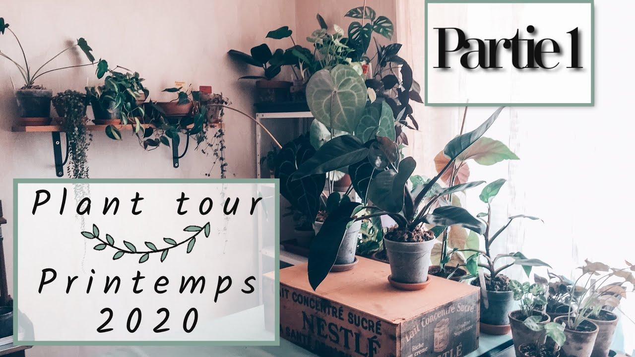 🌿PLANTES TOUR PRINTEMPS 2020 (avant déménagement) PARTIE 1   PLANTES TOUR