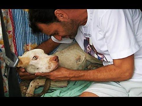 salvado por su perro