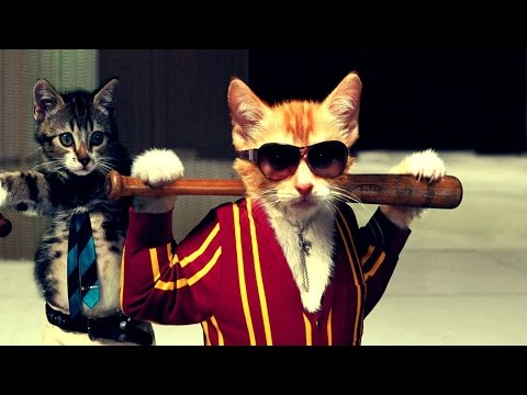Adorable Cats Compilation - Best Cats Thug Life