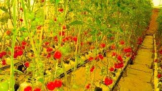 Fareed Farm Faisalabad Pakistan