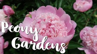 🌷 Visiting the Largest Peony Garden in the Country! 🌷