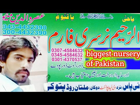 Biggest Nursery Of Pakistan || Nursery Visit Pattoki
