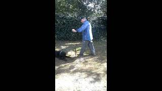 Orlando Puppy Training, Obedience With Distraction, The Lab Ruger