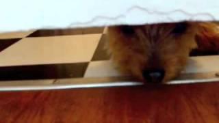 ドアの下を華麗(?)にくぐり抜けるロッキーとそれを見守るルル。Rocky...