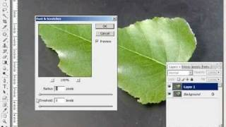 Removing Dust and Scratches in Photoshop - Easy Tutorial Training