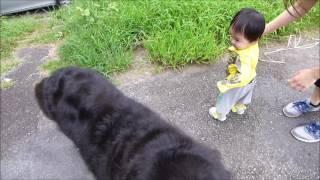バーニーと孫が初めて散歩した。