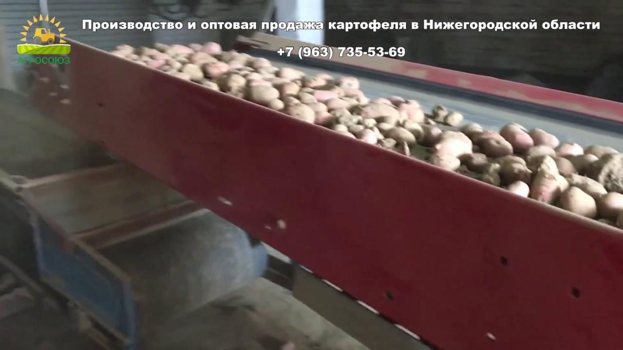 Районирован сорт сарма. Перспективные сорта картофеля светлана, красное лето, иркутский розовый переданы на три гсу иркутской области на государственное испытание. Продолжается разработка других сортов картофеля. Описание. Сарма сорт столовый, среднеранний. Потенциальная.