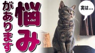 猫の吸い癖..耳がこんなんなっちゃった! thumbnail