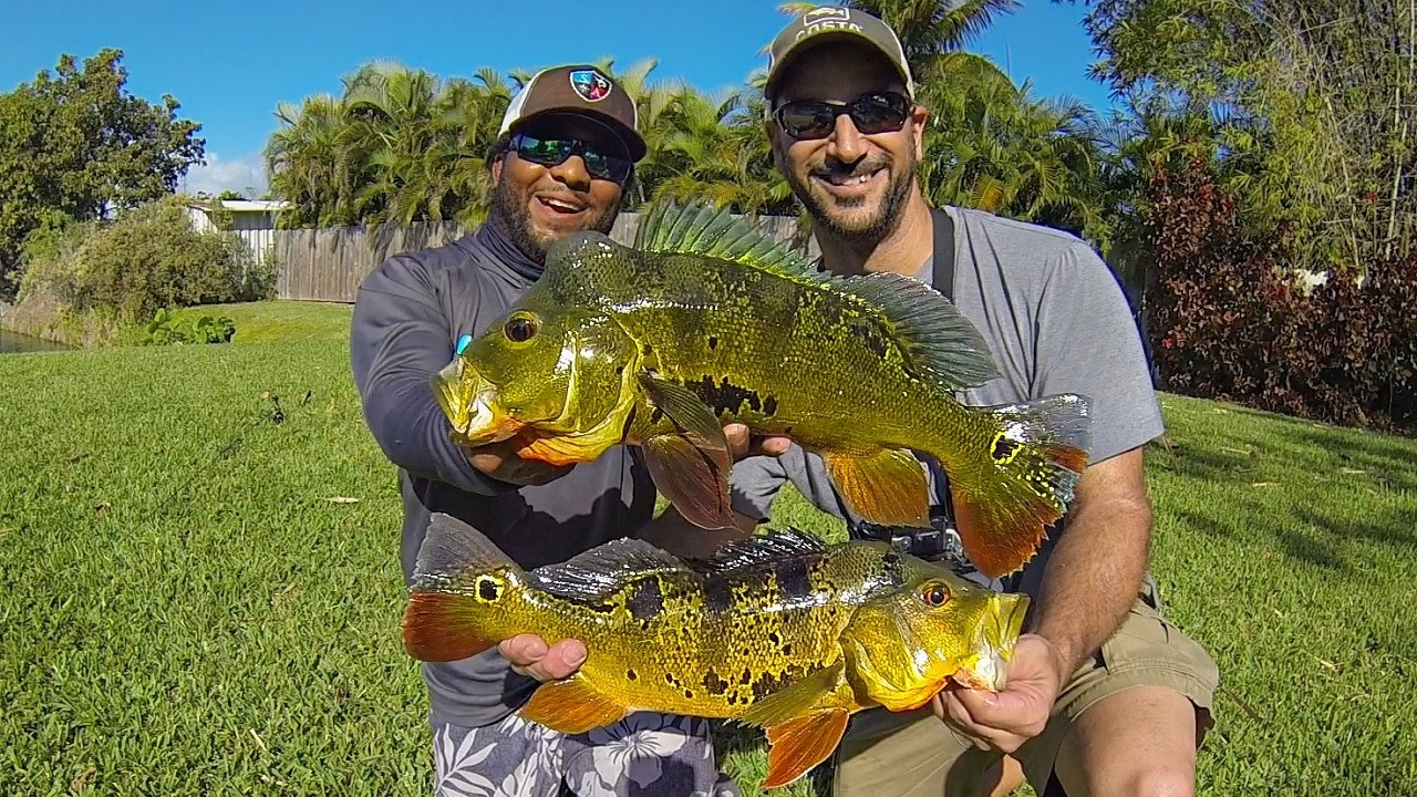 PEACOCK BASS FISHING IN MIAMI FLORIDA Ft MONSTER MIKE