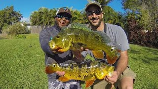 PEACOCK BASS FISHING IN MIAMI FLORIDA (ft. MONSTER MIKE!!!)