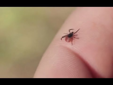 Brace yourselves for Lyme disease outbreak – CDC