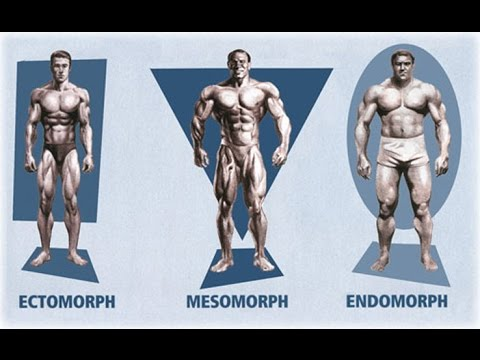Ectomorph? Endomorph? Mesomorph? How To Train & Eat For YOUR Body Type