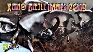 Meet The Rhino Beetle Gladiators | Rhino Beetle Games 2019