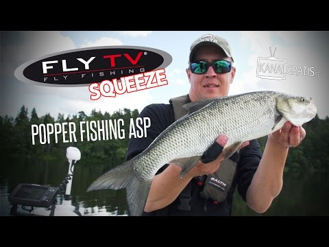 FLY TV Squeeze - Popper Fishing for Asp (Fly Fishing)