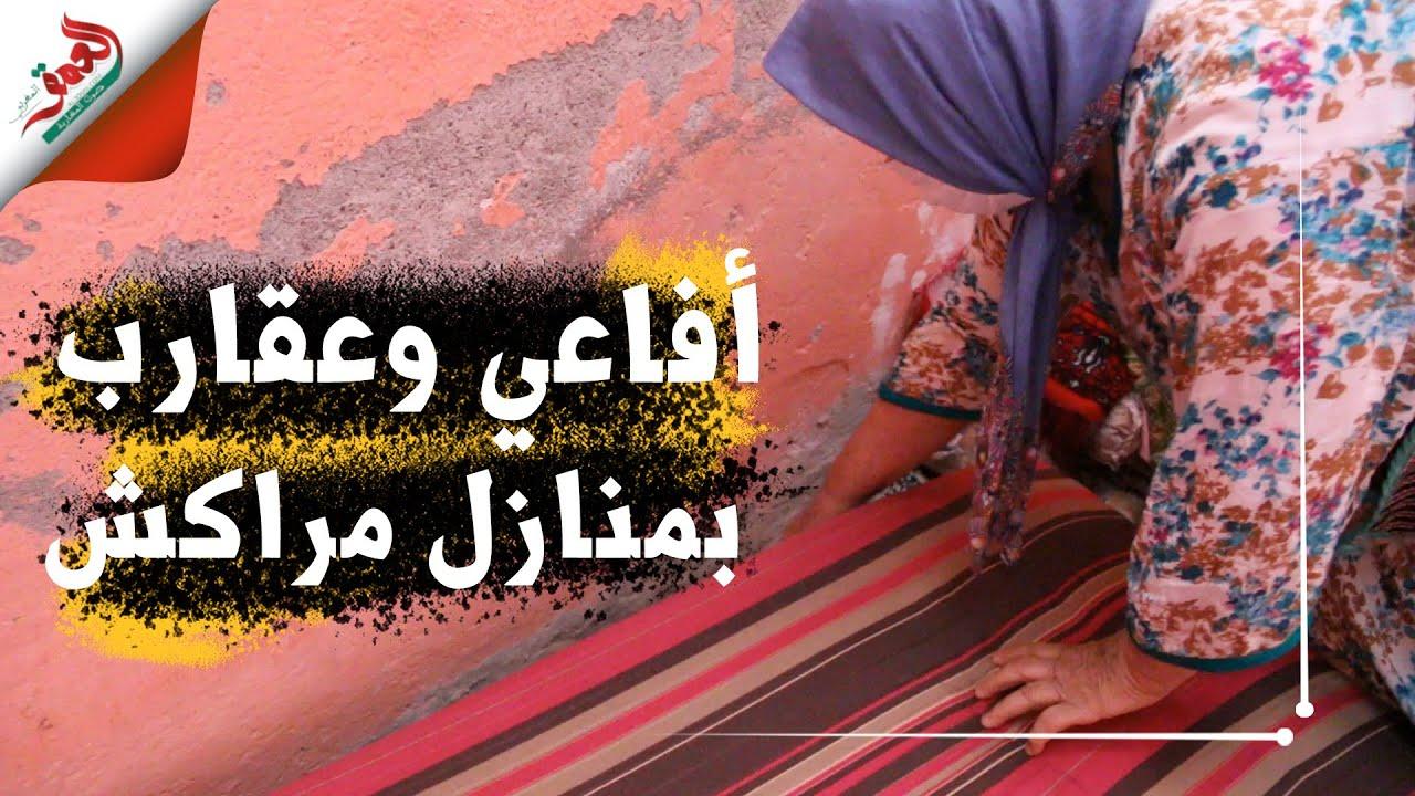 أفاعي وعقارب تخرج من المنازل.. ساكنة أحياء بمراكش تعيش حالة رعب وهذه مطالبهم