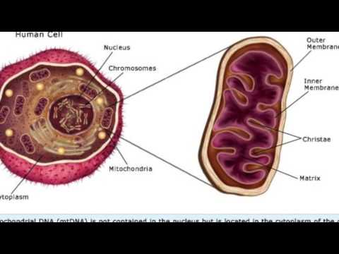 Mitochondrial DNA Analysis in Forensics