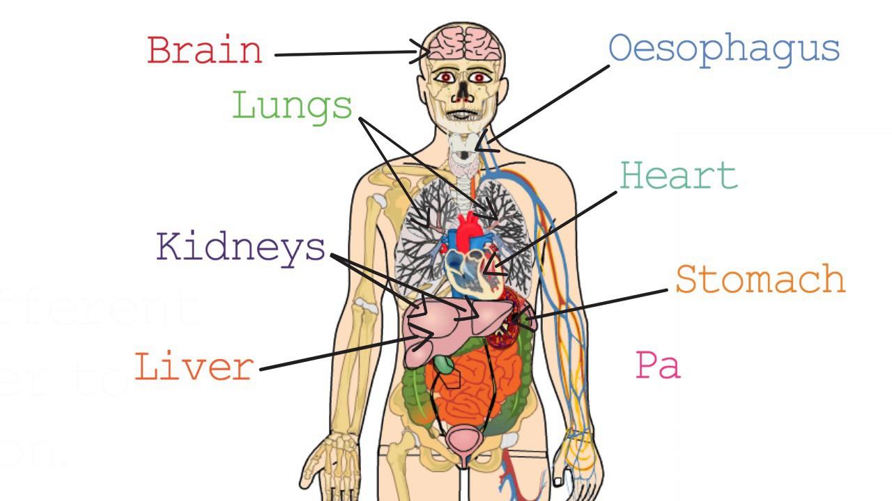 Edexcel Human Biology Igcse 15 Organs Youtube