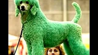 Крашенная собака