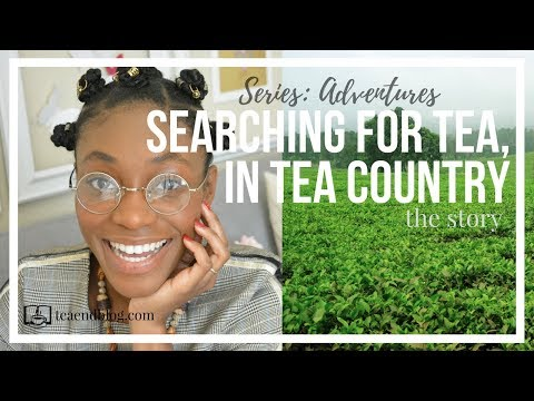 Searching For Tea, In Tea Country - THE STORY