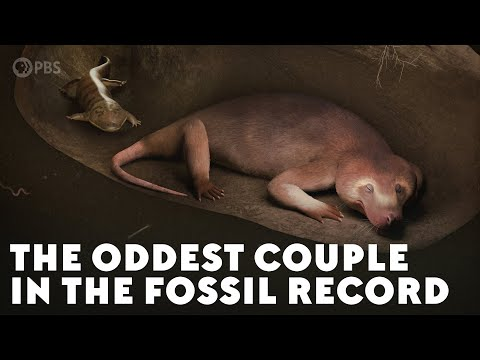 The Oddest Couple in the Fossil Record
